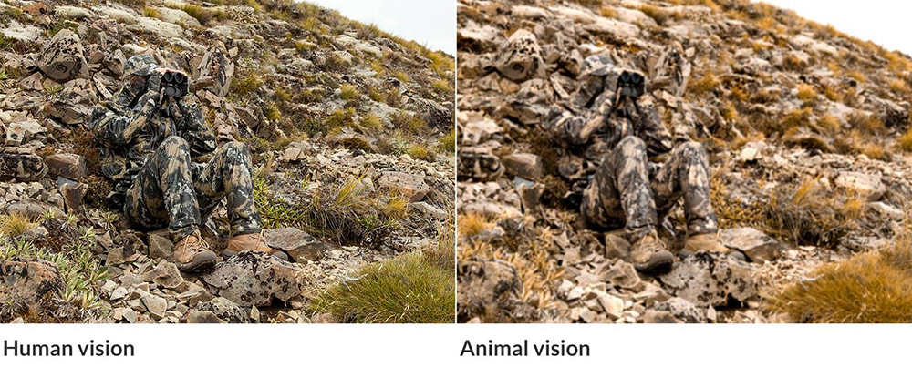 swedteam_camouflage_human-vision-animal-vision